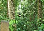 Canopy Zip-line with round-trip transportation from San Juan area