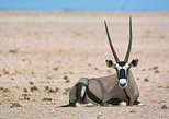 Wildlife and Photography Tour- full-day from Walvis Bay