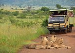 2 Days / 1 Night Pilanesberg National Park Safari - Luxury Camping