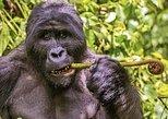 4 Days Double gorilla tour