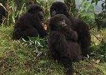 9 Days Rwanda Safari