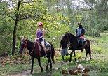 Roatan Combo Tour: Jungle Horseback Riding and Beach Break
