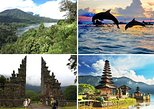 Amazing Bali Dolphin Watching Trip Experience