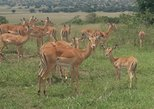1 Day Akagera National Park Safari