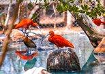 Aviary and Playa Blanca Baru