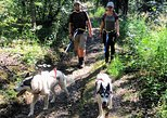 Husky Hike - Guided Nature Walk w/ Siberian Huskies
