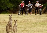 Canberra: 7 Hour Canberra Discovery, Tidbinbilla Wildlife and Electric Bike Tour