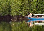 Langkawi Mangrove Forest and Eagle Watching Tour