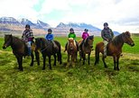 Pleasure in every hoof step - 1 hour riding tour