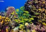 Half Day Private Snorkeling Catamaran Tour in Punta Cana
