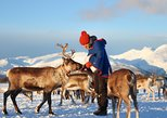 Reindeer Feeding, Lasso Throwing, and Sami Culture Tour Including Lunch from Tromso