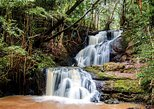 top {{trip101_paragraph_count}} hiking spots in and near nairobi | karura forest