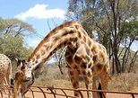 David Sheldrick Orphanage and Giraffe Center Full-Day Tour from Nairobi