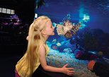 things to do indoors in dallas | discover the marine life at the dallas world aquarium