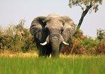 7-Day Okavango Wilderness Trail Small Group Safari from Victoria Falls, Zimbabwe