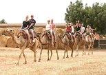 Larnaca Market & Camel Park (Available from Protaras, Ayia Napa & Larnaca)