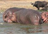 1 Day Lake Mburo Safari