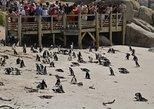 PENGUINS AT BOULDERS BEACH, SIMONSTOWN