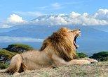 2 days Amboseli overnight mid range safari