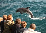 Auckland to Bay of Islands Private Tour