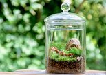 Moss-Art Terrarium Making with Moss Specialist