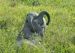 2 days safari in Mikumi