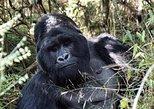12 Day Adventure Uganda Affordable Safari Code: 12DayUgandaAff2019