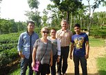 Full Sylhet & Srimongol Tour