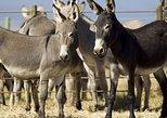 Golden Donkey Farm Ticket only - (Available from Limassol, Larnaca & Ayia Napa)