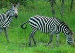 1 Day Lake Mburo National Park Short Safari from Kampala