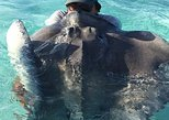 Come and see the stingrays, and the rest of the cayman islands with us .