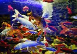 Ocean Aquarium - from Protaras - (Ticket Only)