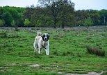 Tour of Breite Ancient Oak Tree Reserve