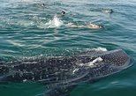 Whale Shark Adeventure Small Group
