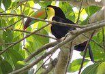 Guatemala Birding Tour at Tikal National Park