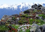 2 Days Olympic National Park & Mt. Rainier National Park Tour from Seattle