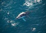 Ocean Safari Heli-Whale Watch