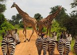 10 Days Serengeti Wildlife Safari and Tanzania Cultural Tour 7,690 USD