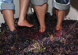 Douro Valley Grape Harvest Small Group Tour: Grape Stomping, Wine Tasting, Lunch
