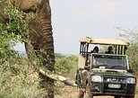 Kruger National Park Full Day Game Drive