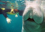 3-Hour Manatee Swim and Paddle Tour in Crystal River