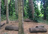 Forest Bathing on a King's Hill