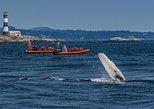 Victoria Avistamiento de ballenas en un barco zodiacal. Isla de Vancouver, CANADA