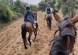 From Seville: 2-Hour Horseback Riding Experience in Aljarafe