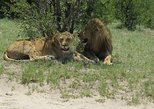 Africa & Mid East - Botswana: Chobe Day Trip -Bostwana: From Livingstone Zambia