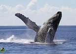 Whale Watching Samana + Bacardi Island with Lunch by Locals