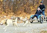 Mush Your Own Sled Dog Team