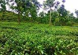 Sreemangal Tea Garden & Rain forest Expedition