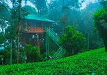 Munnar-Treehouse stay