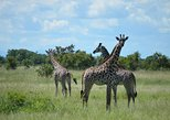 2 Days 1 Night Mikumi National Park from Dar es salaam